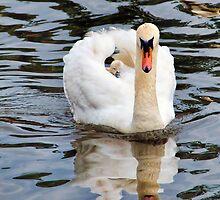 Water Taxi by Susie Peek