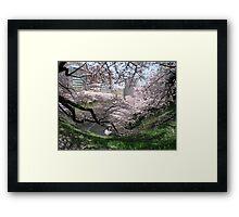 Springtime In Tokyo Framed Print