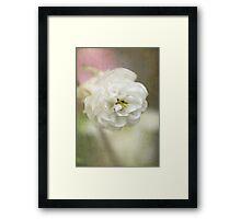 Columbine white Framed Print