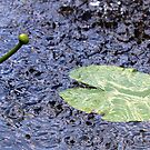 Rain on the Waterlily by RosiLorz