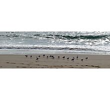 Feathering Heights Photographic Print