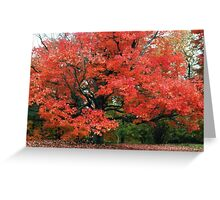 Orange You a Beautiful Tree Greeting Card