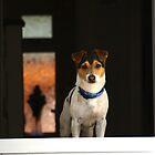 Jack Russell in doorway by turniptowers