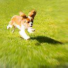 Run Puppy Run by daphsam
