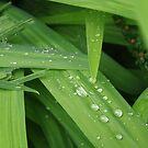 Raindrops on Crocosmia by lezvee