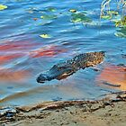 Good Morning Alligator by Cynthia48