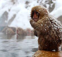 Snow monkey by Tammy Tan