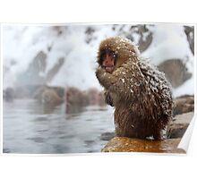 Snow monkey Poster