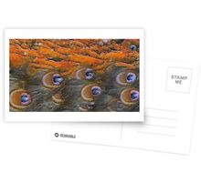 Painted Peacock Postcards