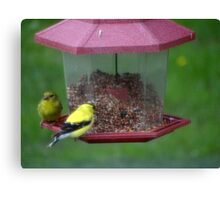 Mr. and Mrs. Goldfinch Canvas Print