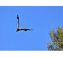 Joy Flight Photographic Print