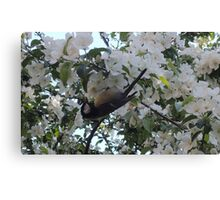 Nimble Musician (Bird in Blossom) Canvas Print