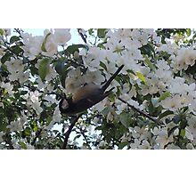Nimble Musician (Bird in Blossom) Photographic Print