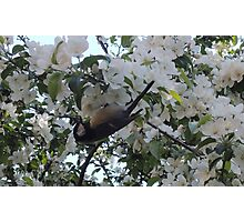Nimble Musician (Bird in Blossom) Photographic Print