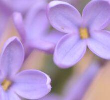 Lilac Macro, As Is Sticker
