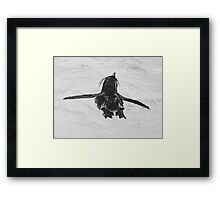Rock Hopper Penguin 2 Framed Print