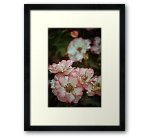 Rose 299 Framed Print