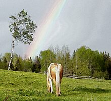 Palomino Paint Horse and Rainbow Artwork by NaturePrints