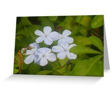 Island Plantlife Greeting Card