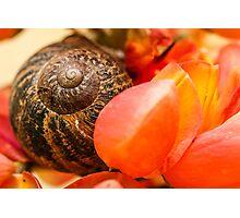 Nature's Spiral Photographic Print