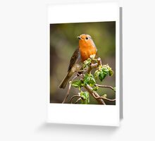 Red Breast Greeting Card