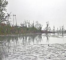 Blue Heron on Lake Fairlee by Caleb Ward