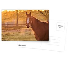 Good Morning Whiskers! Postcards