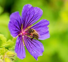 Honey Bee at Work by Nick Jenkins