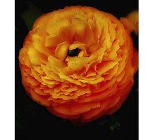 Beauty of the Orange flower Photographic Print