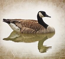 Canada Goose - Vintage Style by SRowe Art