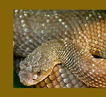 Serpiente Zoo by tyrrias