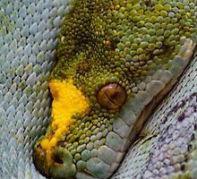 Serpiente 2 Zoo by tyrrias