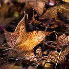 Death of Autumn by Mark  Lucey