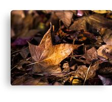Death of Autumn Canvas Print
