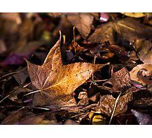 Death of Autumn Photographic Print
