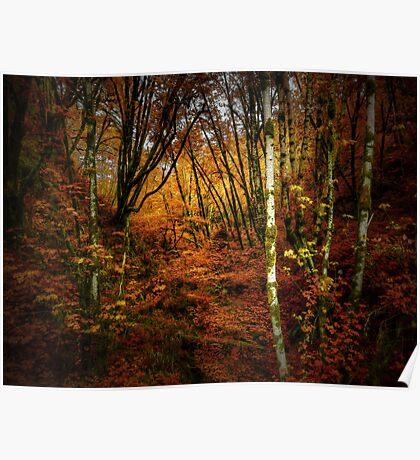 Fall Delight ~ Red Alder Trees ~ Poster