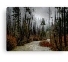 Winters Love ~ Upper Fall Creek ~ Canvas Print