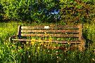 Harlow Bench by Nigel Bangert