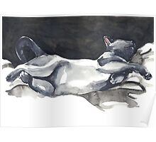Cat Naps: The Life Model Poster