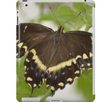 Butterfly 6 iPad Case/Skin