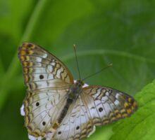 Butterfly 9 Sticker