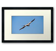 Black Kite Framed Print