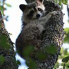 Texas Tree Hugger by Dennis Stewart