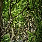 The Dark Hedges by Evelina Kremsdorf
