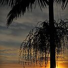 Seed pods on a palm tree at sunrise by myraj