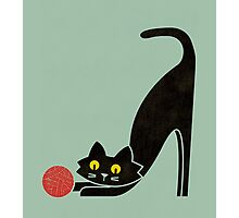 The curious cat Photographic Print