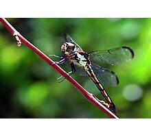 Everglades Dragon Photographic Print