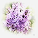 ~ Lilac Dreams ~ by Brenda Boisvert