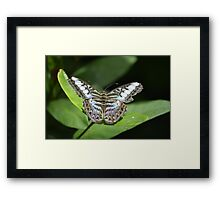 Butterfly 11 Framed Print