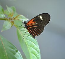 Butterfly 13 by Sunshinesmile83